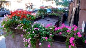 """""""Summer Blooms NY Sreet"""""""