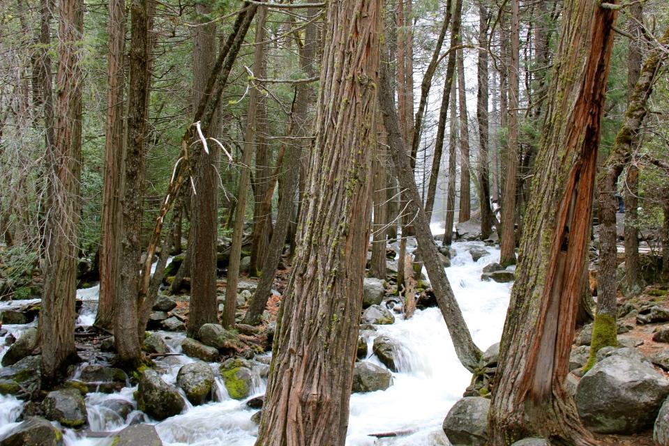 trees, stream, Yosemite national park