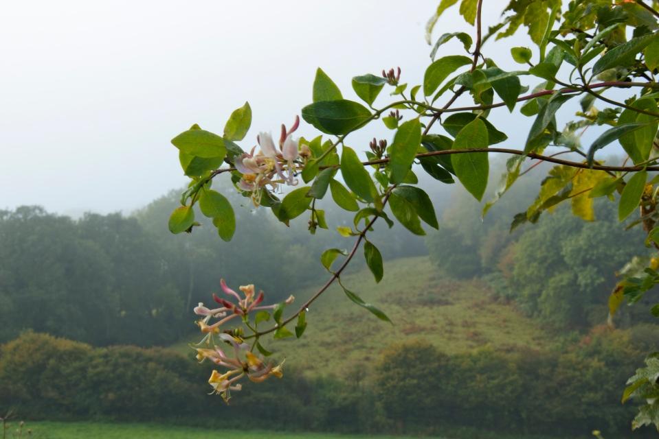 fields of mist