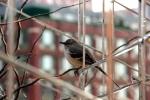 High Line Sparrow