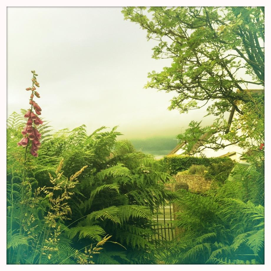 Foxgloves English Summer