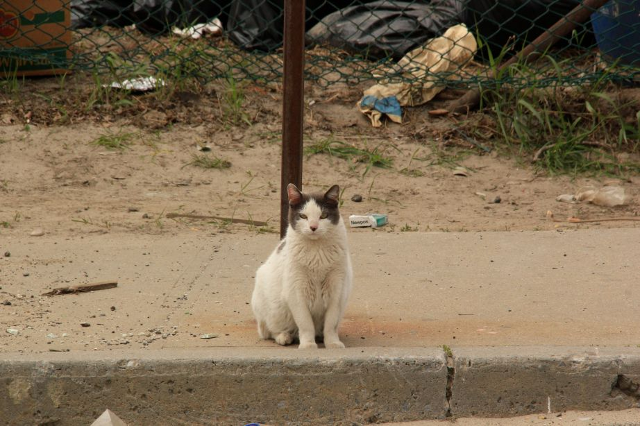 IMG_5118/Cat on sidewalk in Rockaway.  PA*F