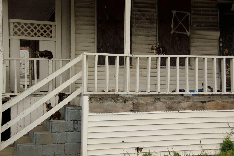IMG_5121 Cats on verandah of old Rockaway house.  PA*F