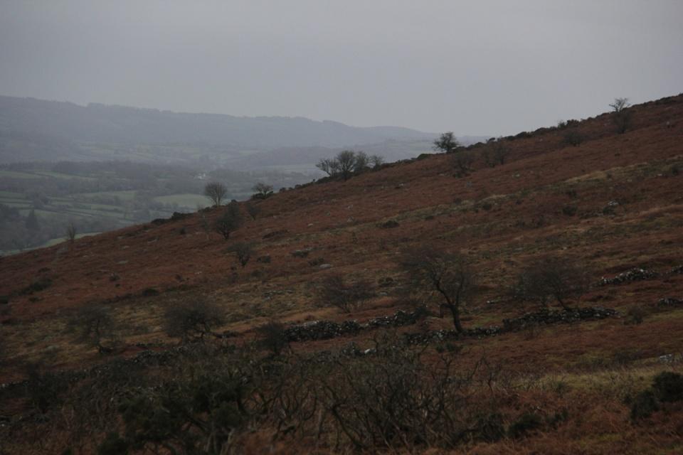Dartmoor - 036