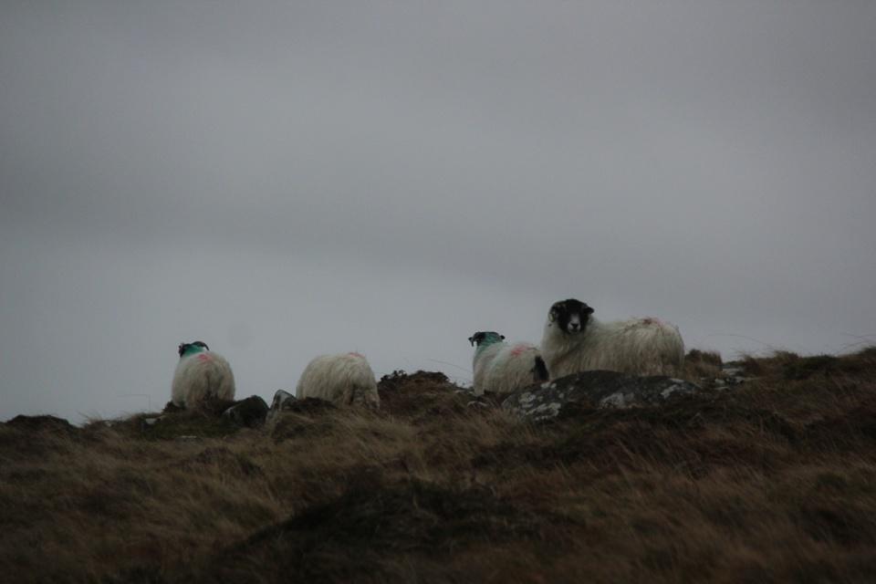 Dartmoor - 045