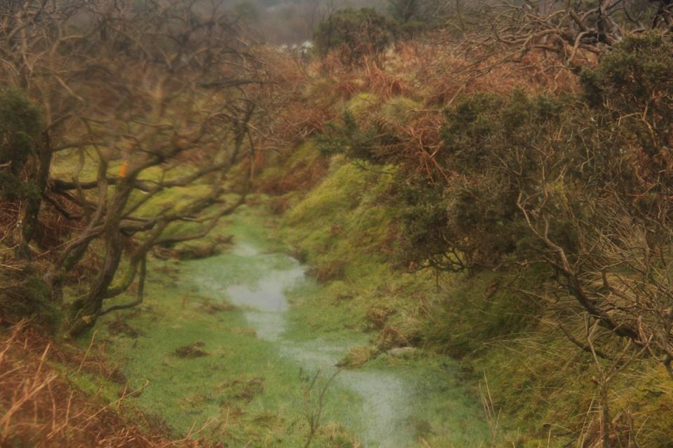 Dartmoor - 092