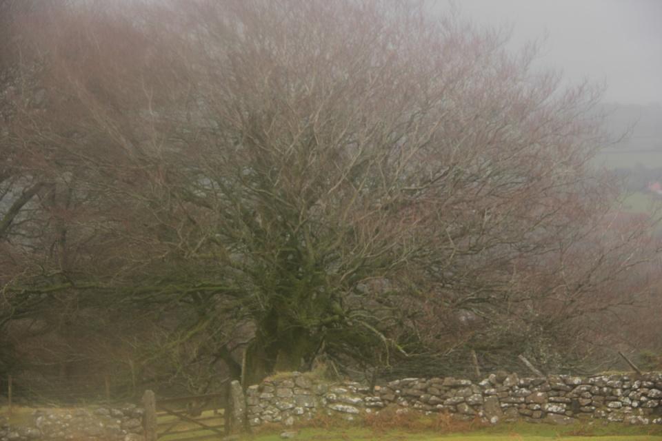 Dartmoor - 101