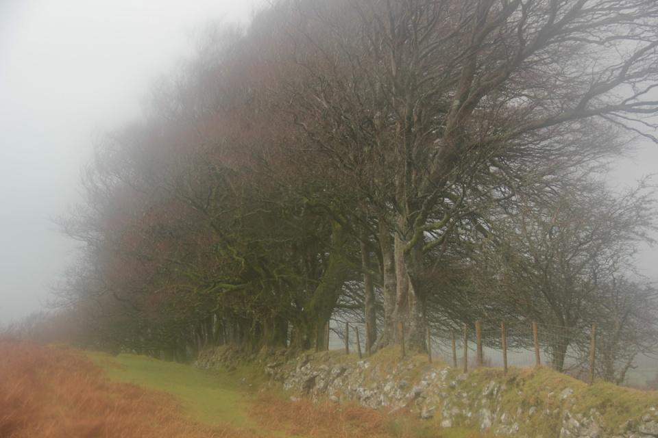 Dartmoor - 104