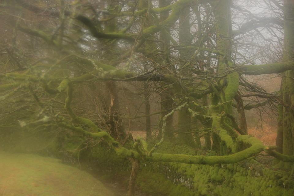 Dartmoor - 108