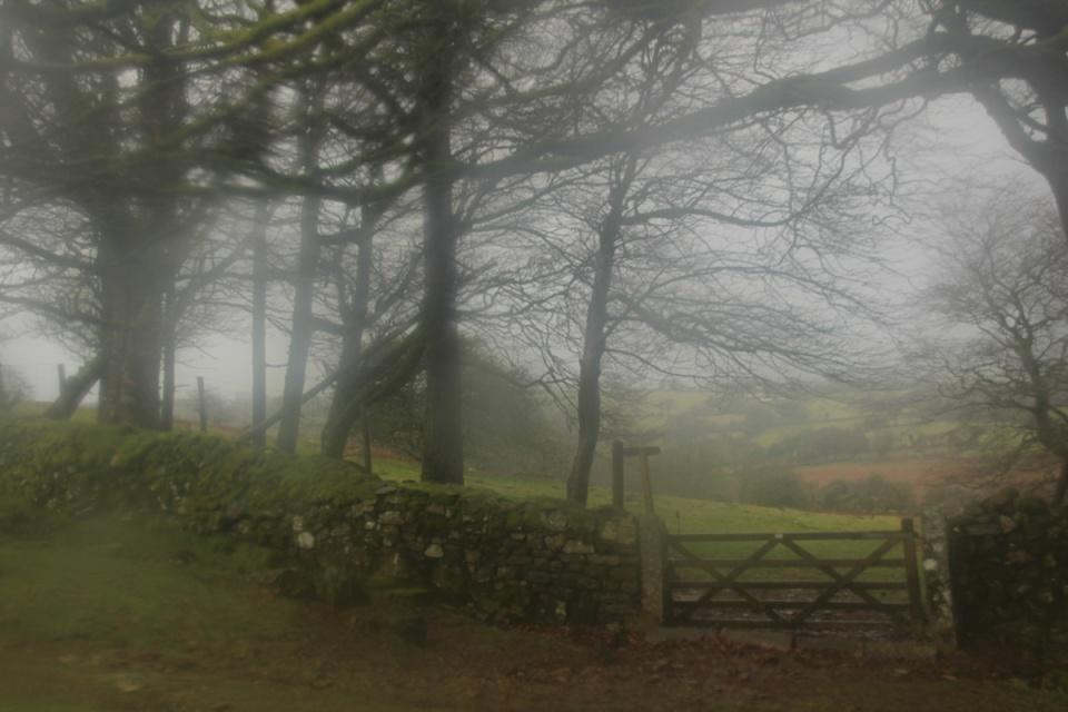 Dartmoor - 109