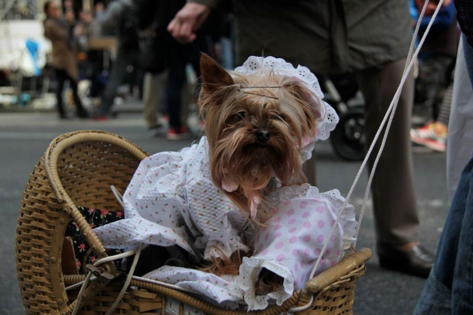 Wicker Dog_Patti Fogarty