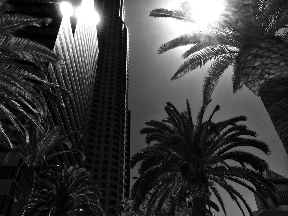 Palm trees in LA Heatwave