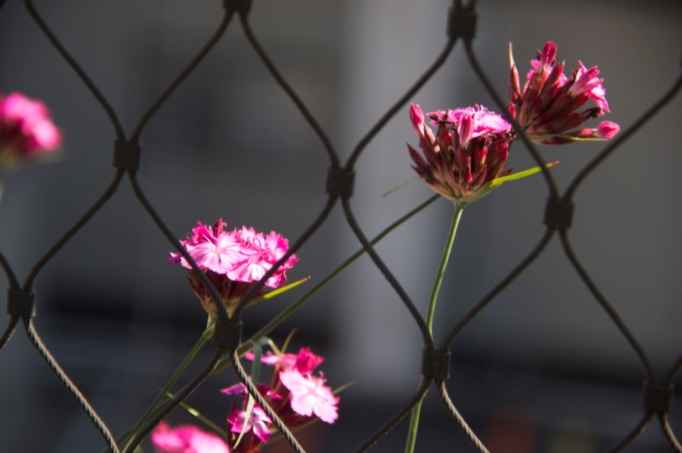 Flowers and barbed wire, from the High Line with Joe and Stacy