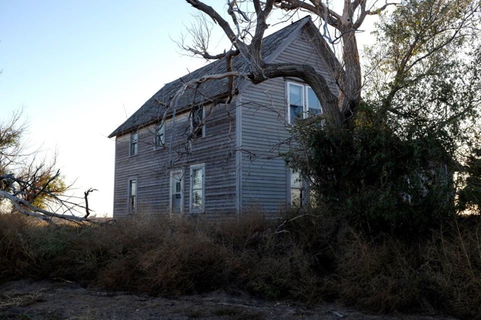 House trees
